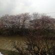 家の近所の川で撮った…