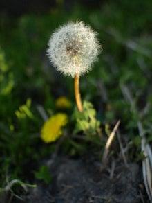 $かっちゃんの日記-鬼怒川沿いの花