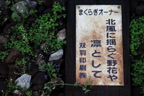 孝の独り歩き(写真活動編)