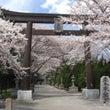 河口湖周辺の桜201…