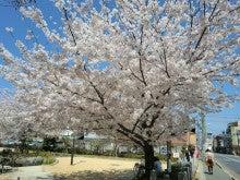 赤と黒-桜井公園①