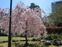 赤と黒-桜井公園⑥