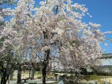 赤と黒-桜井公園③