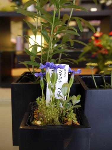$日本のもの、こと  桃兎の部屋-Hana-koyomi山野草