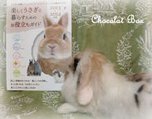 Chocolat Box(羊毛フェルト教室とうさぎ作品)
