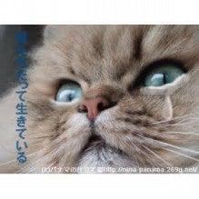 <b>福岡猫虐待事件</b>について|イヌ、<b>ネコ</b>、その他の動物<b>虐待</b>を止める為の <b>...</b>