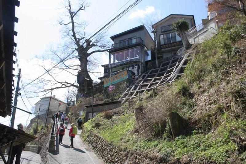 御岳城/神代の欅
