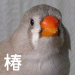 椿(ぷぅぷぅ団姉)