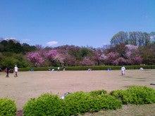 コミュニティ・ベーカリー                          風のすみかな日々-桜