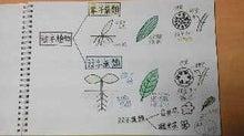 畑とねこと子どもたちと3-shokubutsu-bunrui3