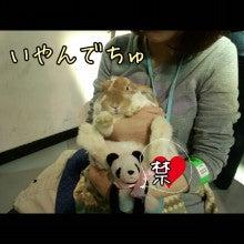 うさぎとパンダと-Camely_20130414_155135.jpg