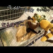 うさぎとパンダと-Camely_20130415_100647.jpg