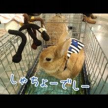 うさぎとパンダと-Camely_20130414_160733.jpg