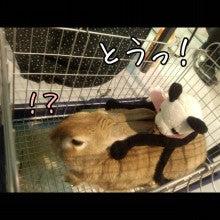 うさぎとパンダと-Camely_20130415_100358.jpg