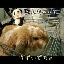 うさぎとパンダと-Camely_20130414_154932.jpg
