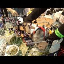 うさぎとパンダと-Camely_20130414_160025.jpg