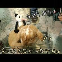 うさぎとパンダと-Camely_20130414_154733.jpg