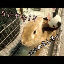 うさぎとパンダと-Camely_20130415_100512.jpg