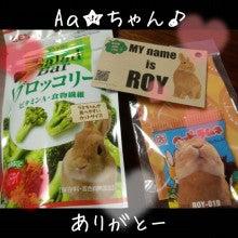 うさぎとパンダと-Camely_20130415_101619.jpg