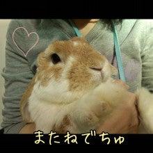 うさぎとパンダと-Camely_20130414_155248.jpg