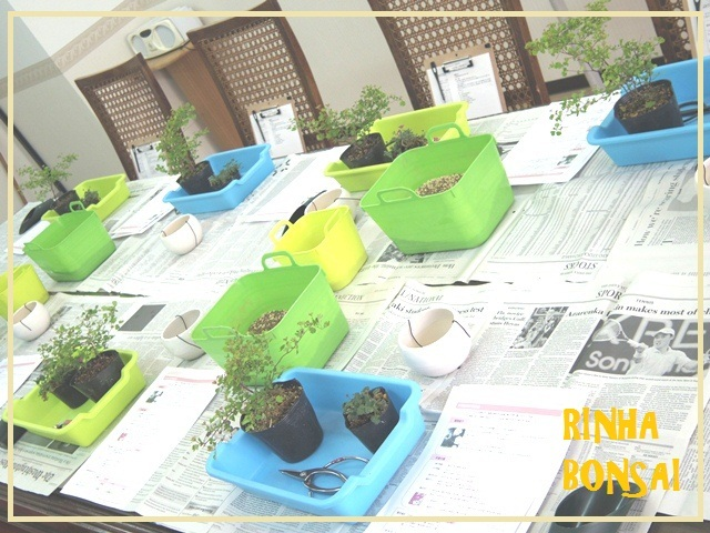 bonsai life      -盆栽のある暮らし- 東京の盆栽教室 琳葉(りんは)盆栽 RINHA BONSAI-琳葉盆栽 教室風景