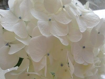 阪神トレーディング 広島営業所のブログ