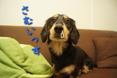 35歳独身女、4畳半で犬を飼う。