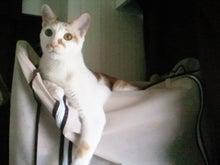 PFL★MIKIのブログ-2013041608410000.jpg