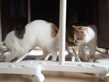 PFL★MIKIのブログ-2013041908440000.jpg