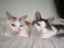 PFL★MIKIのブログ-2013042011560000.jpg