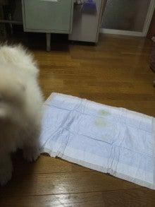 サモエド犬ラッキーのらき日記-DVC00178.jpg