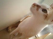 PFL★MIKIのブログ-2013042216280000.jpg