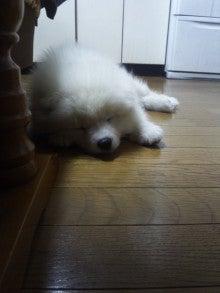 サモエド犬ラッキーのらき日記-DVC00188.jpg