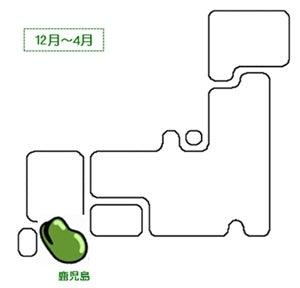 フリーライター・大崎直美のつれづれ日記-そら豆_産地01