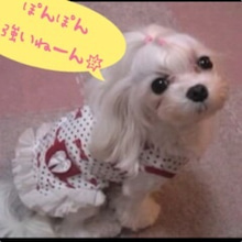 ぽんのブログ-image07.jpg