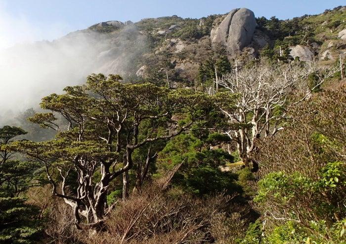 歩き人ふみの徒歩世界旅行 日本・台湾編-木々