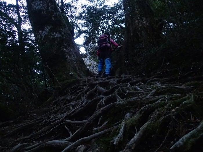 歩き人ふみの徒歩世界旅行 日本・台湾編-早朝の山中