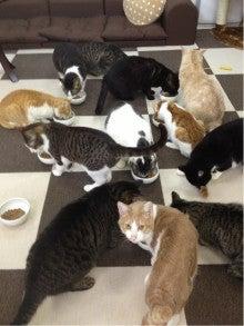 待ち猫たちの日常