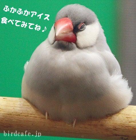ようこそ!とりみカフェ!!~鳥カフェでの出来事や鳥写真~-文鳥・セキセイ・オカメアイス開発中!