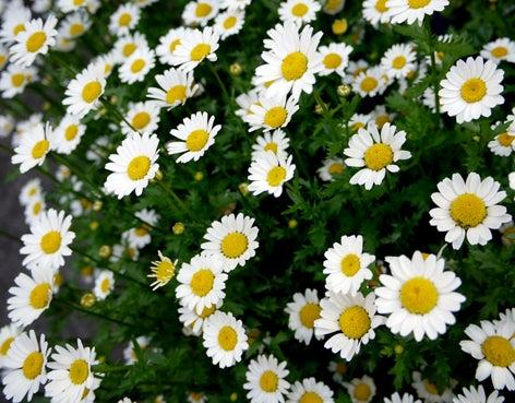 $日本のもの、こと  桃兎の部屋-春の花
