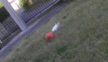 $すすきのBEATの営業雑感 -20130427 バスケットボールと猫