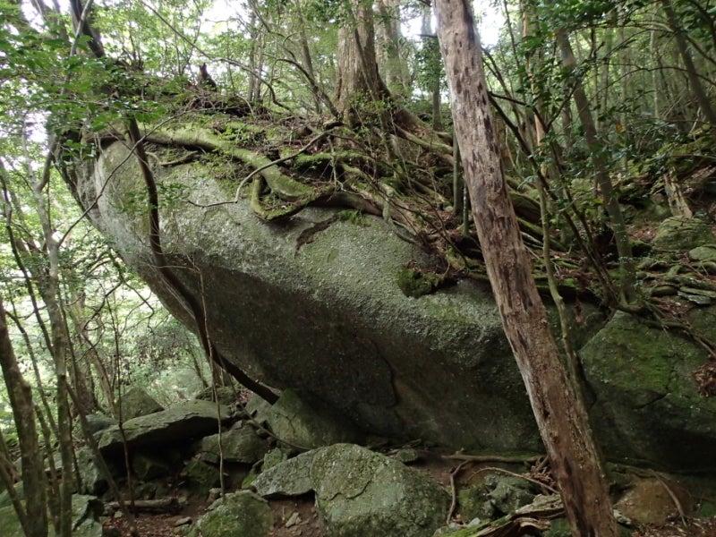 歩き人ふみの徒歩世界旅行 日本・台湾編-岩の上の木2