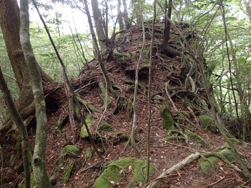 歩き人ふみの徒歩世界旅行 日本・台湾編-岩の上の木3