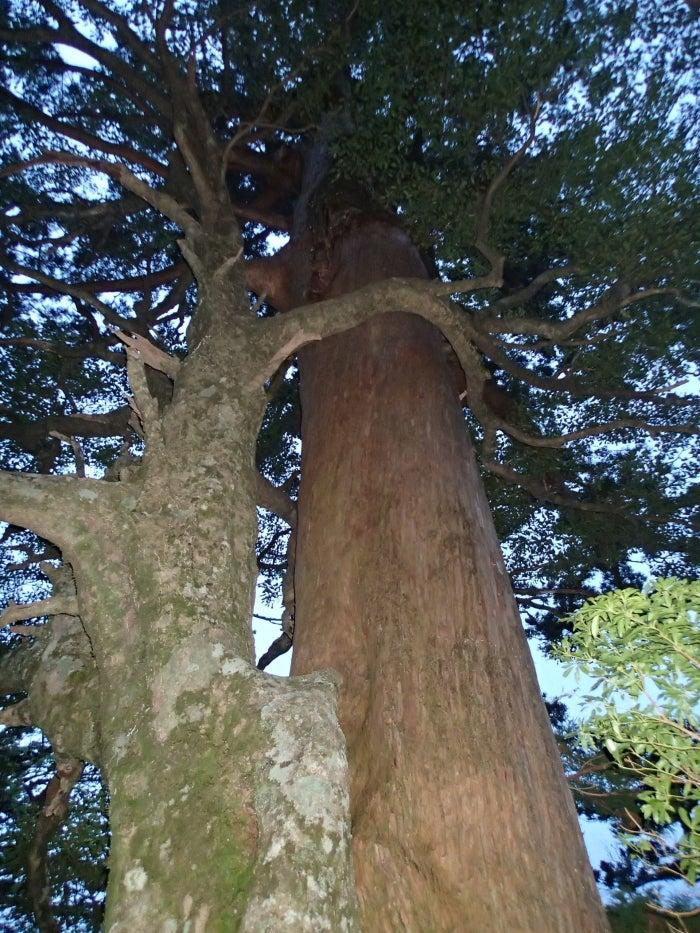 歩き人ふみの徒歩世界旅行 日本・台湾編-寄り添う木