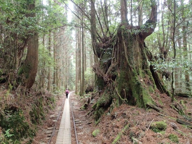 歩き人ふみの徒歩世界旅行 日本・台湾編-トロッコ道