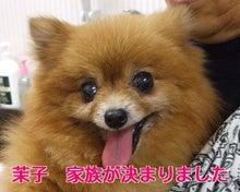ちび助ママのブログ-茉子