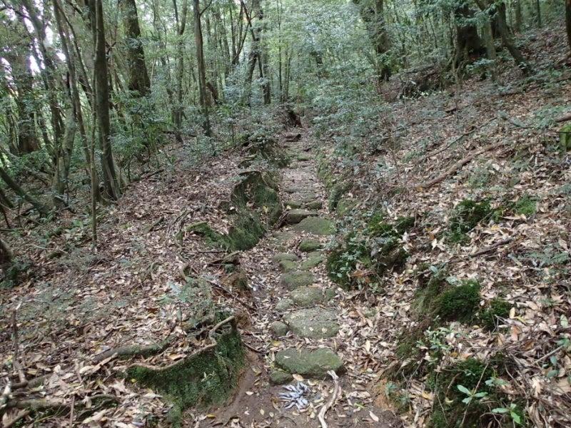 歩き人ふみの徒歩世界旅行 日本・台湾編-楠川歩道