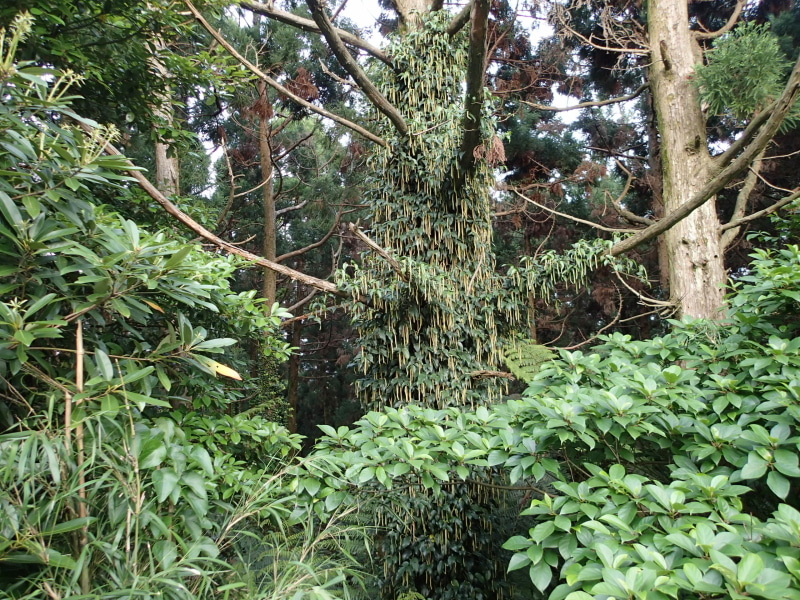 歩き人ふみの徒歩世界旅行 日本・台湾編-ムックの木