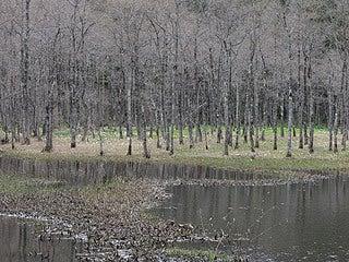 晴れのち曇り時々Ameブロ-仁田沼の風景
