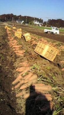 East Farm  農業日記-2013013011570000.jpg